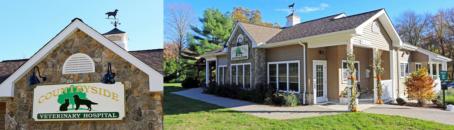 Connecticut clinic joins Community Veterinary Partners
