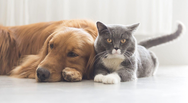 Diabetes Pet Care Alliance ends clinic enrollment cap