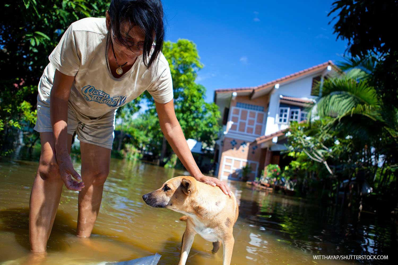 Pet evacuation kit educates vets and clients