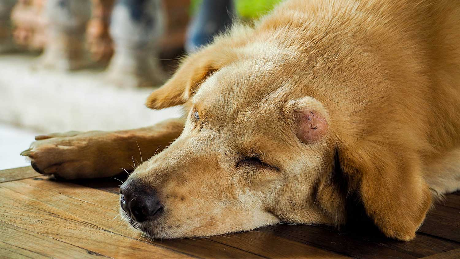 Brakke examines the state of pet cancer