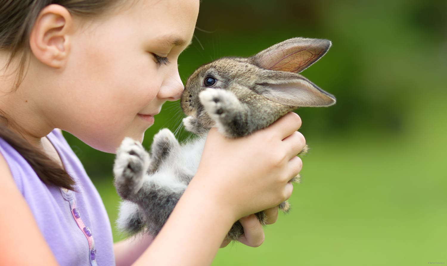 Rabbits and hamsters grow in popularity