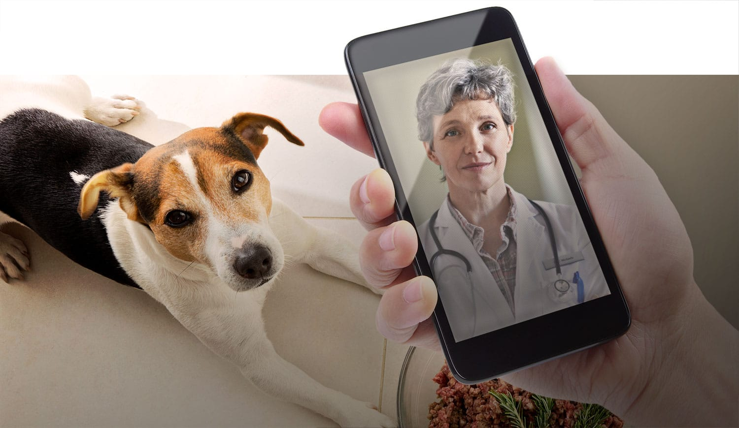 Smartphones and pets  and nurses … oh, my!