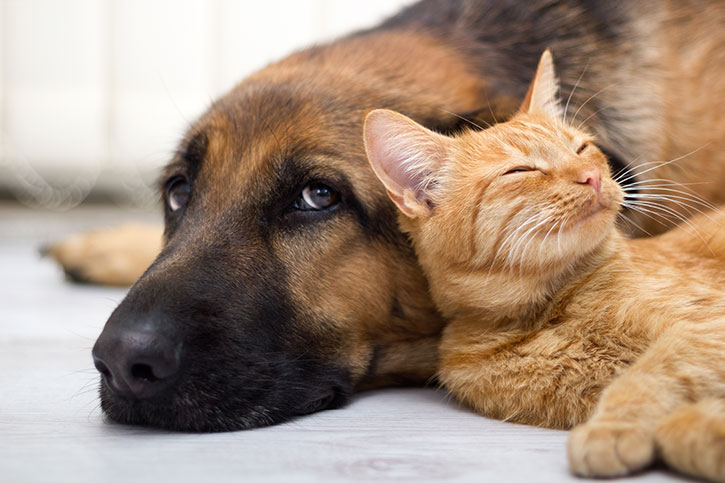 AAHA releases guidelines for managing pet diabetes