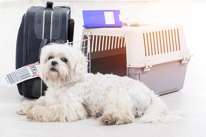 AVMA helps United revise pet flight document