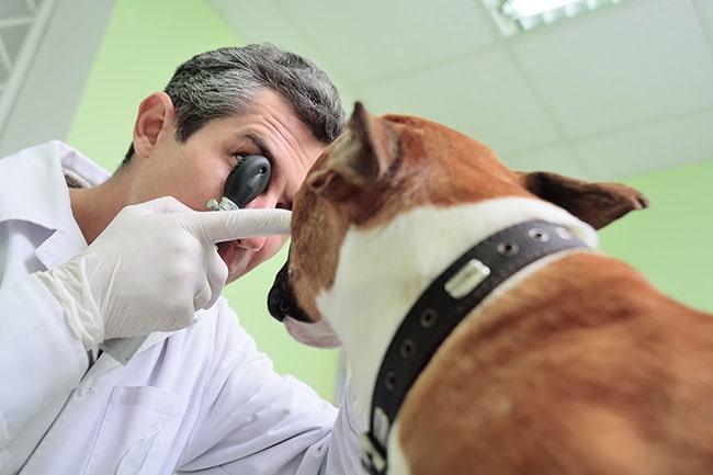 Sign-ups begin for free service animal eye exams