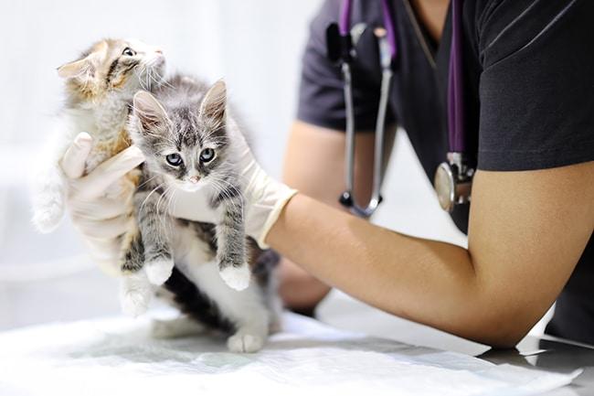 Kitten health insurance grows in popularity
