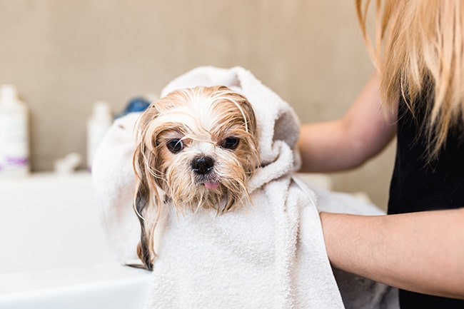 Pet grooming is a nearly<br> $3 billion business