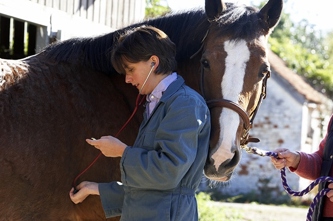 Merck updates Prestige equine influenza vaccines