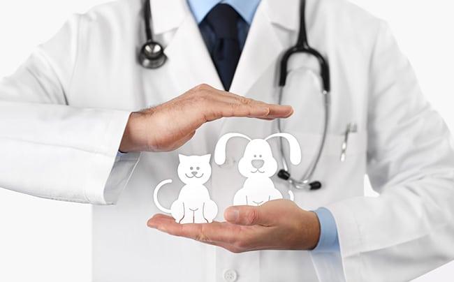 Place a premium on pet insurance