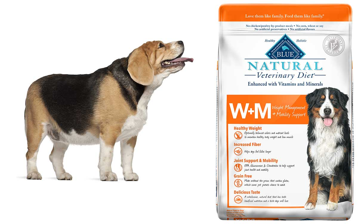 Blue launches vet-exclusive weight, mobility dog food