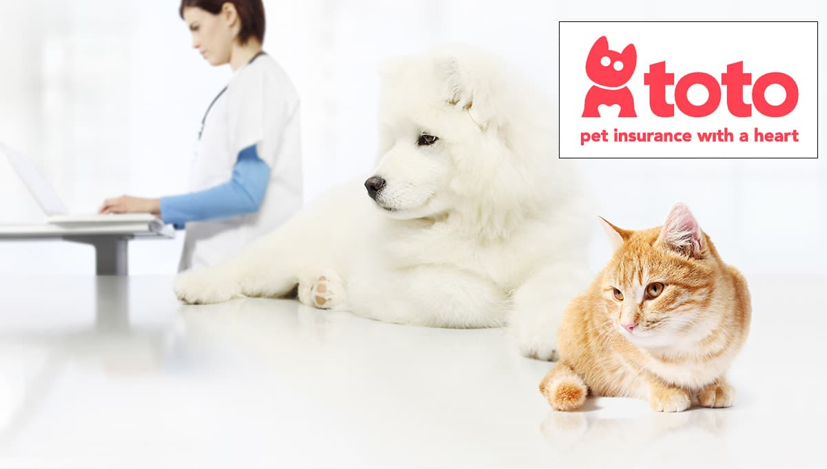 New pet insurer enters with a charitable goal