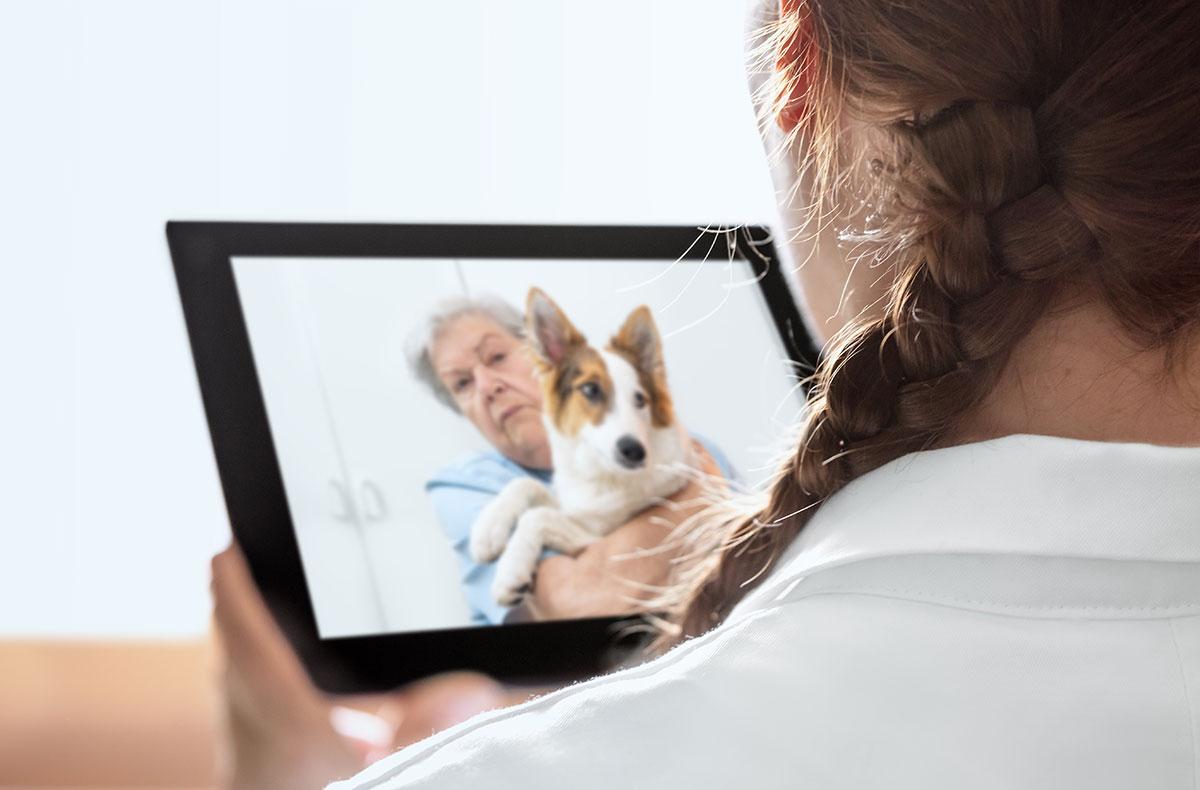 AAVSB supports veterinary telemedicine reform