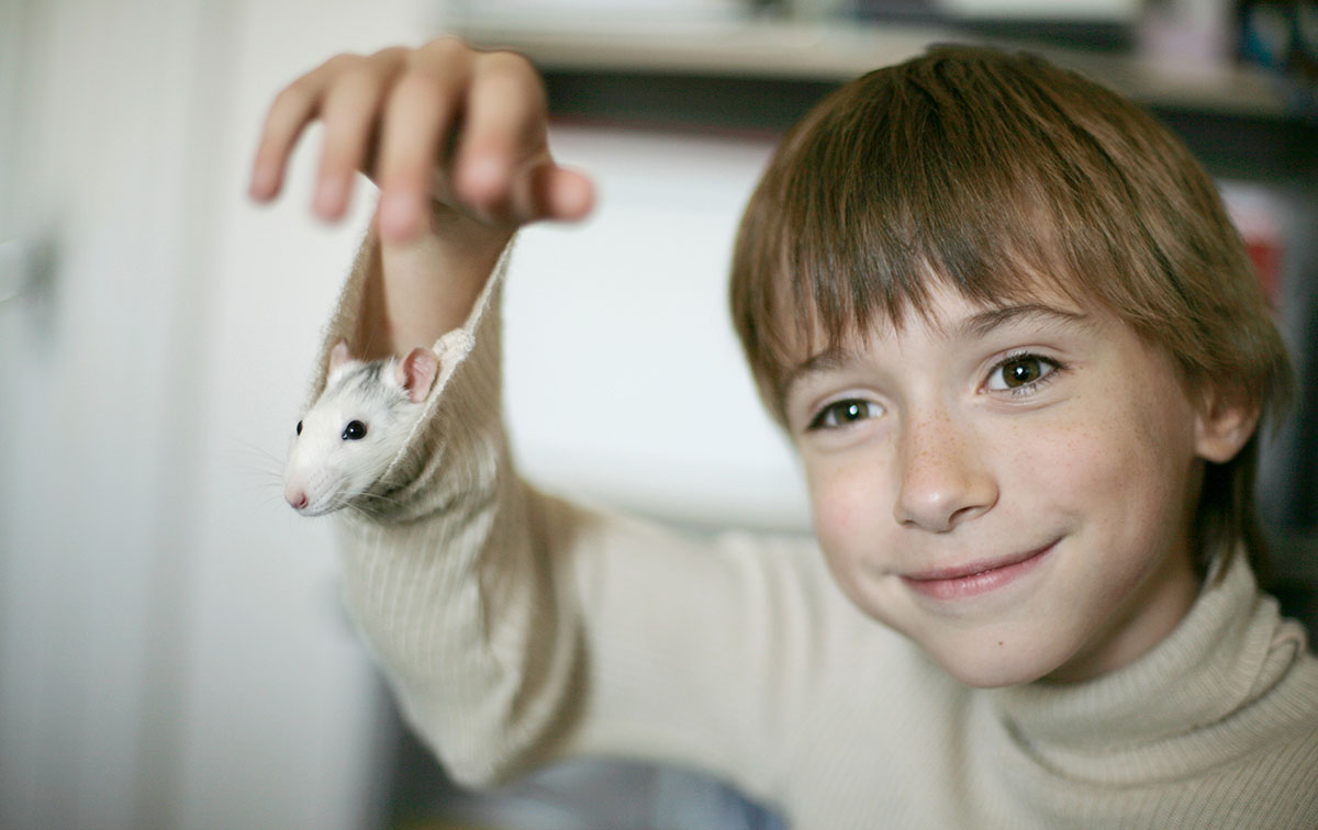 Survey: Kids favor rats over other pets