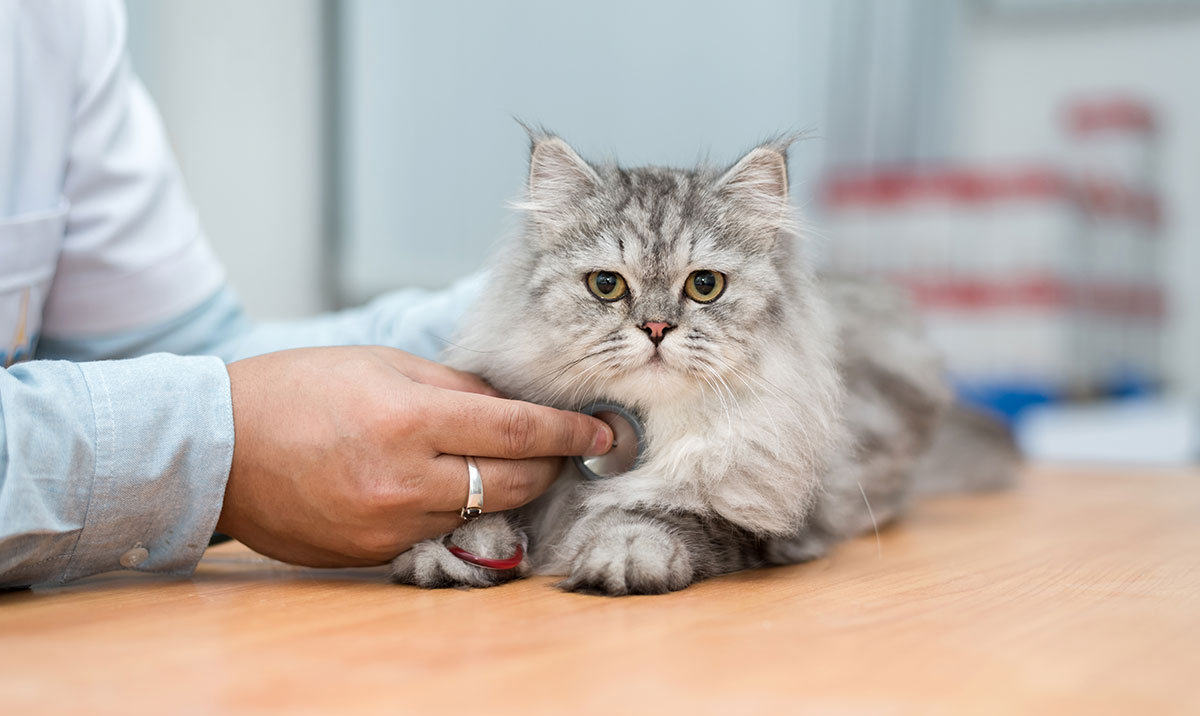 AVMA survey explores pet ownership trends