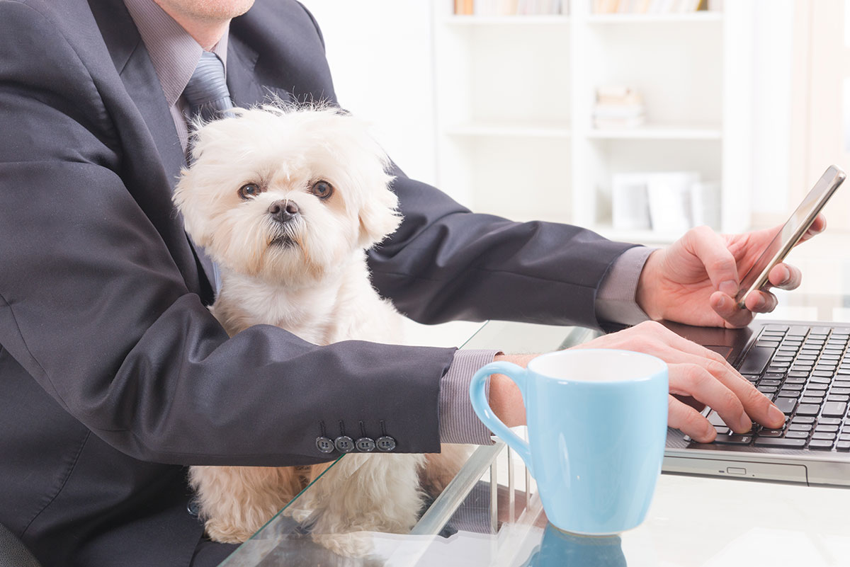 Pets played key role in executives' early life