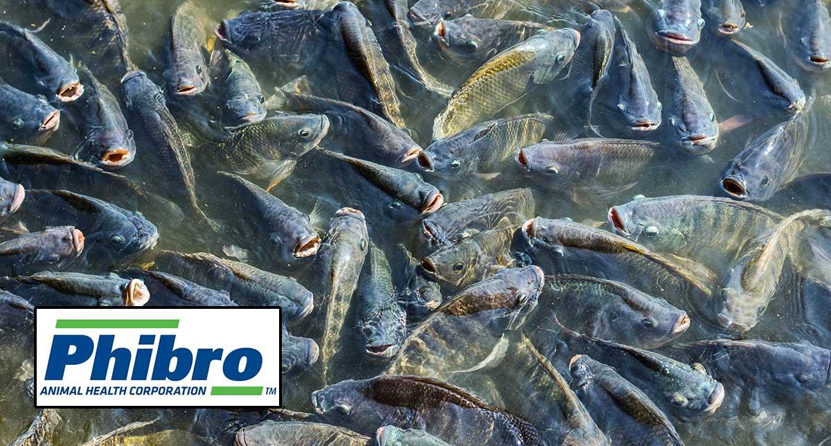 Phibro acquires Israeli fish vaccine developer