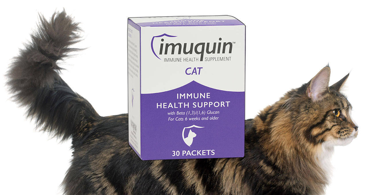 Nutramax releases Imuquin Cat supplement