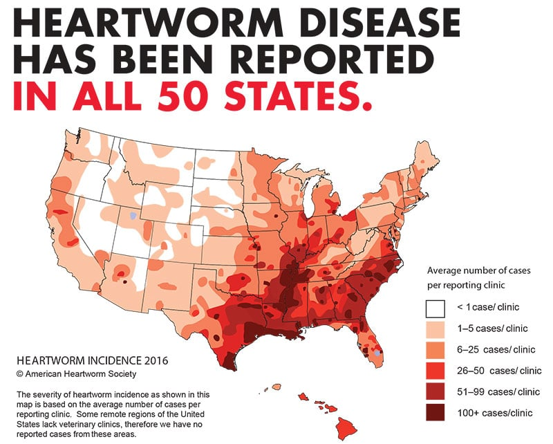 heartworm incidence