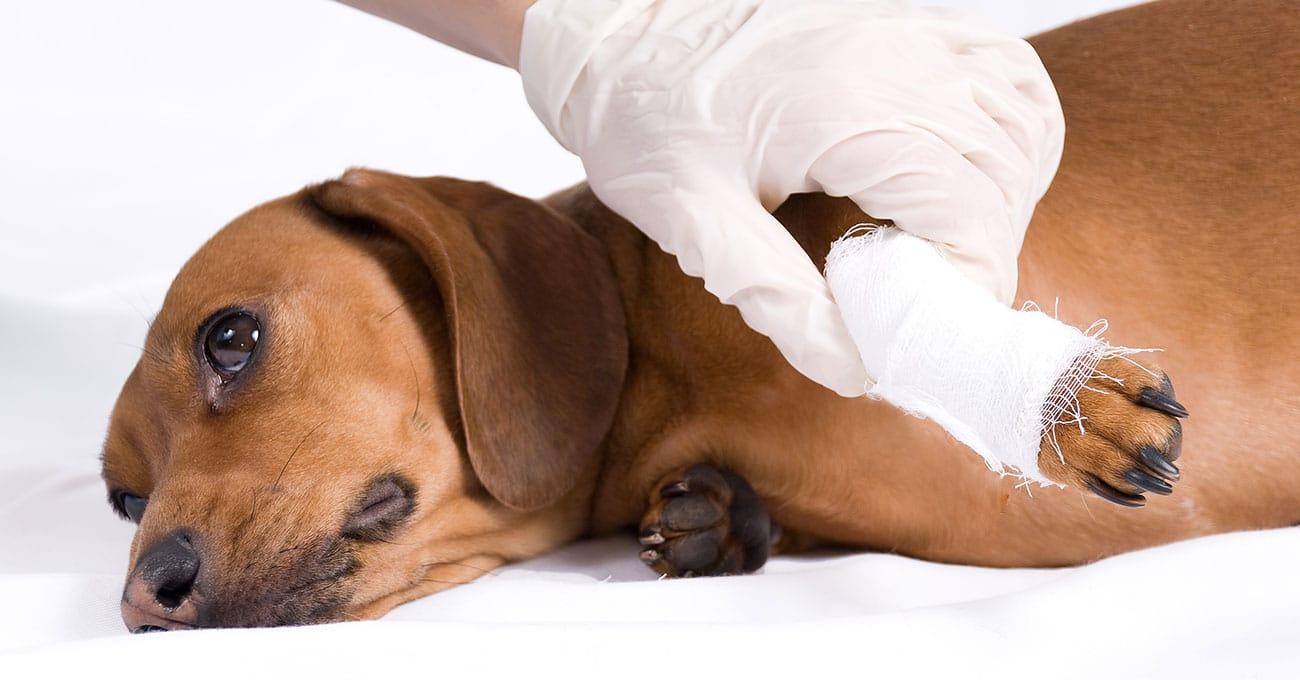 U.S. veterinary care is a nearly $19 billion market