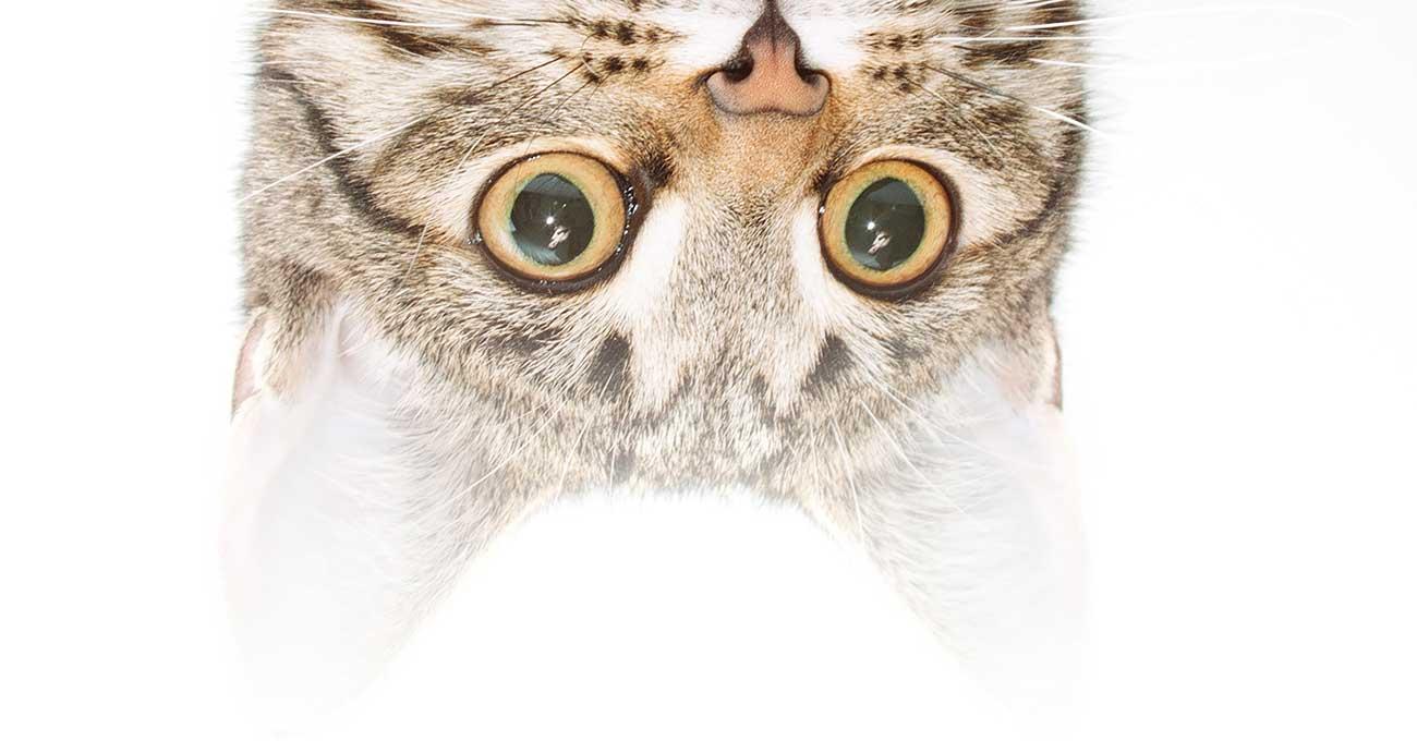 The forgotten feline