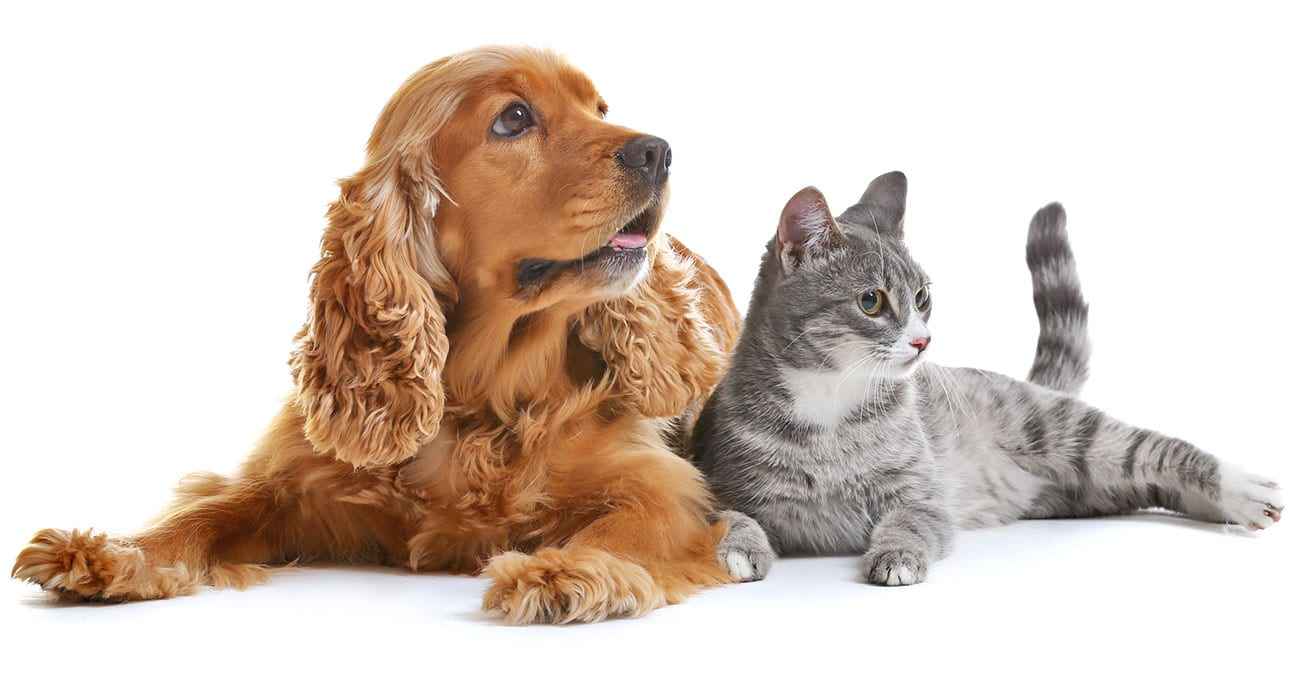 Insured Pet Population Grows By 18 Today S Veterinary Business