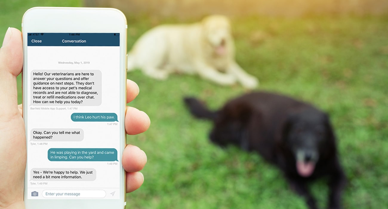 Banfield launches Vet Chat telehealth service