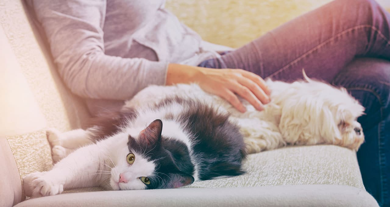 Survey: 44% are unaware of pet insurance