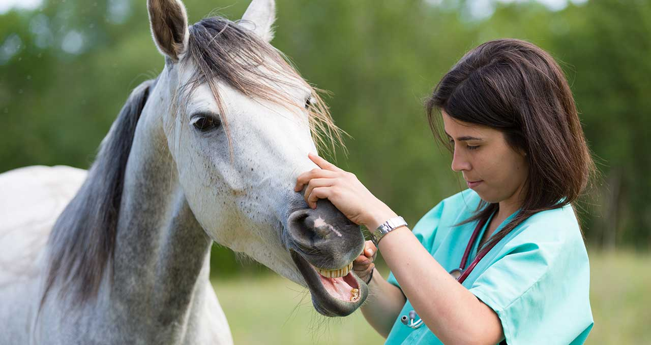 ASPCA horse insurance expands to 12 states
