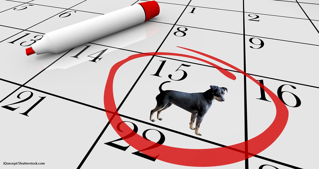 Banfield clients can make vet tech appointments