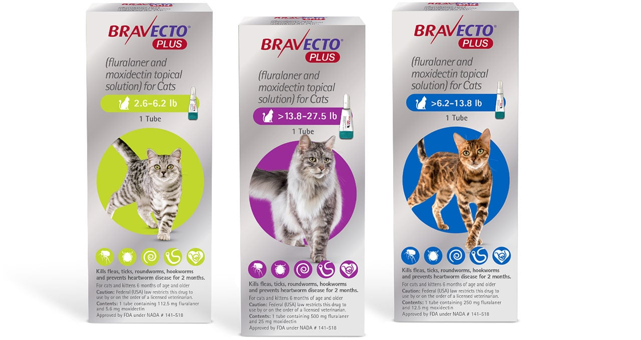 FDA approves broad-spectrum Bravecto Plus for cats