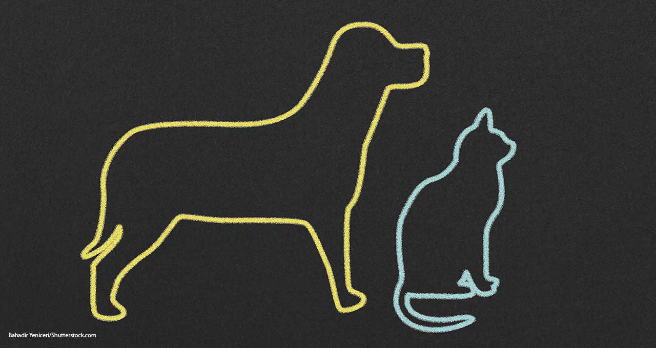 Lemonade to expand into pet insurance