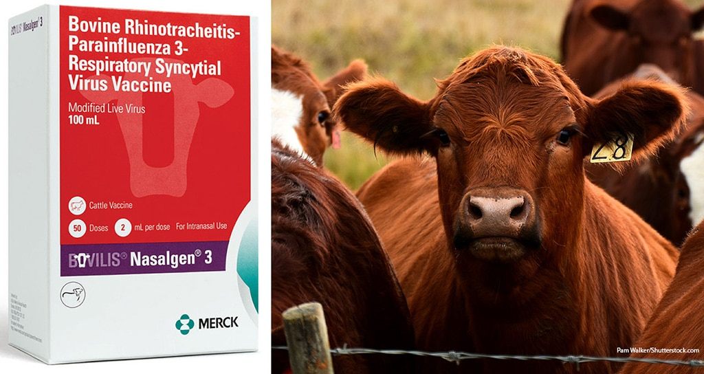 Merck introduces three-way cattle vaccine