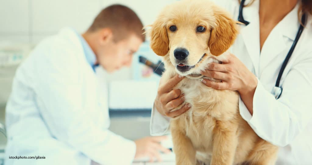 veterinary technicians