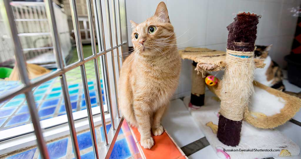 Packaged Facts predicts decline in pet boarding