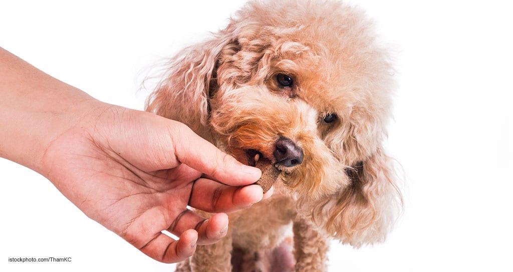 chewable pet medication