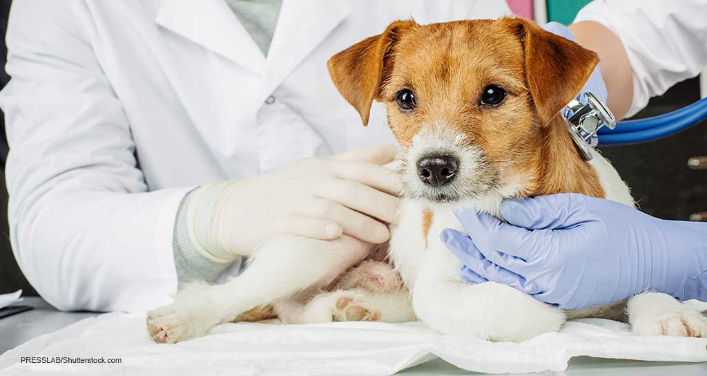 2.8% of U.S. dogs carry health insurance