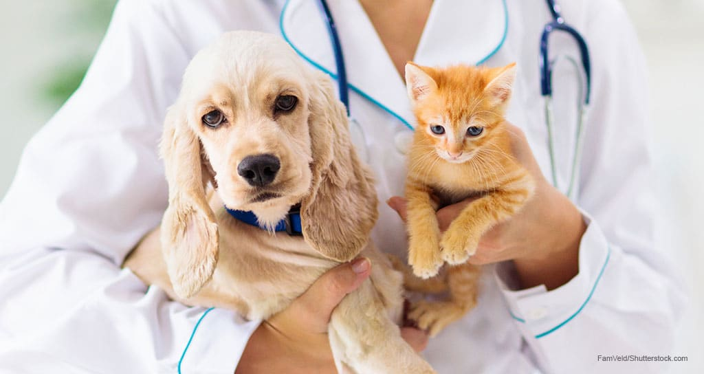 Pet insurance continues double-digit growth