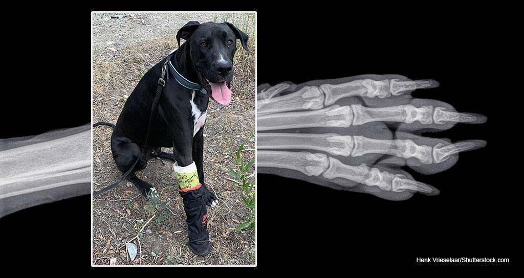 My dog broke his leg