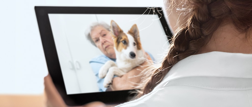Innovations to watch in veterinary medicine