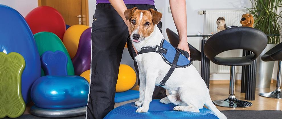 The value of integrative veterinary medicine