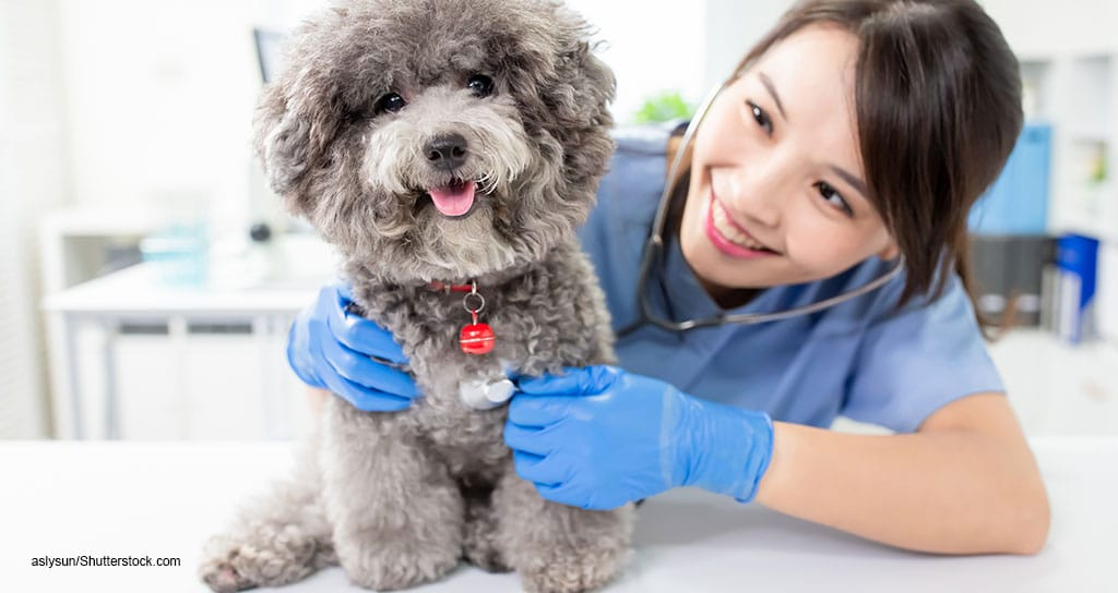 New veterinarians earn average pay of $70,045