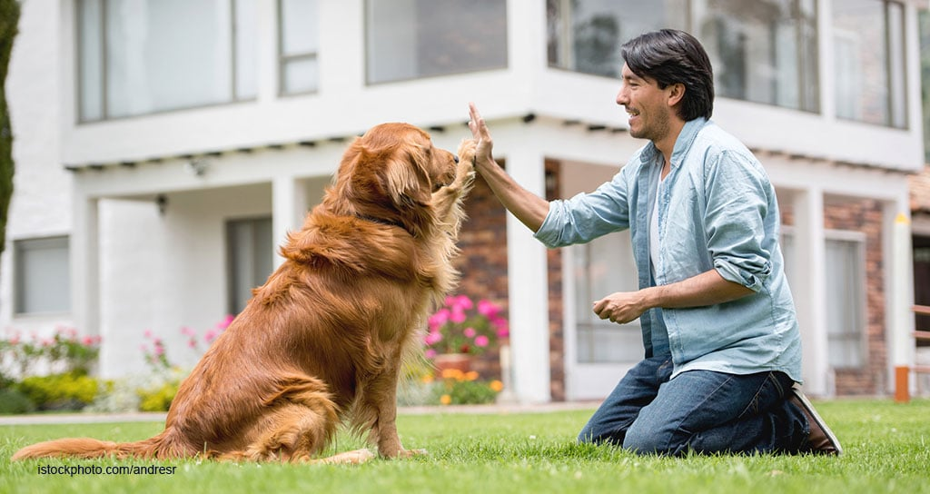 Bond With a Pet Trainer