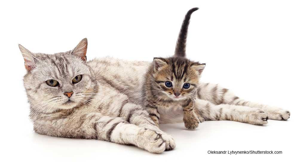 AAHA, AAFP Release Feline Life Stage Guidelines