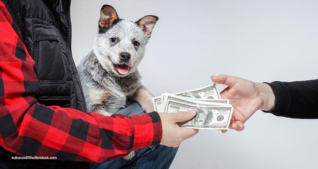 U.S. Veterinary Market Totaled $31.4 Billion in 2020