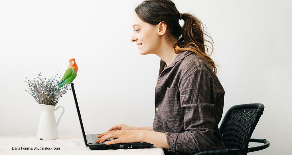 pet birds medicine