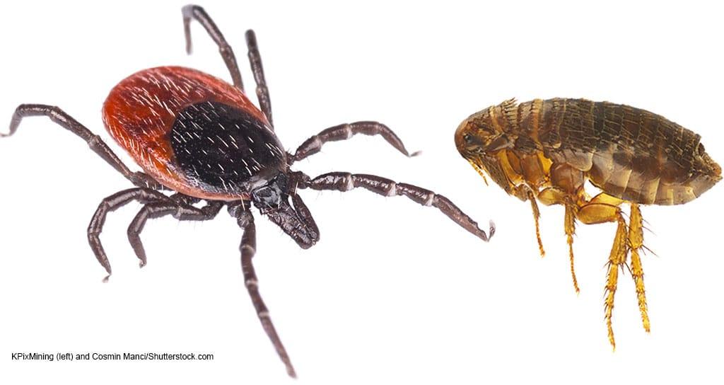 tick and flea Credelio Cat