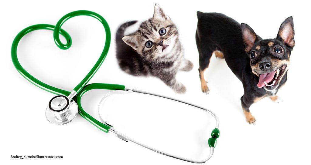 The Future of Pet Care